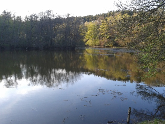 Езерото в Хамър Ууд